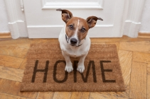 Home Dog2.jpeg